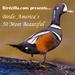 Birds: America's 50 Most Beautiful